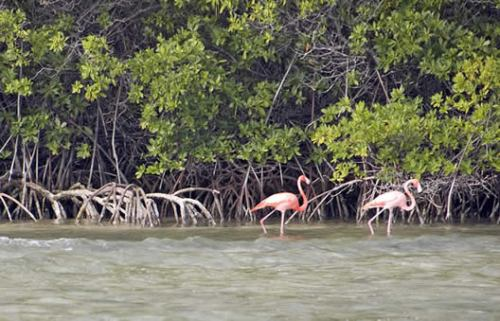 flamingoes_003