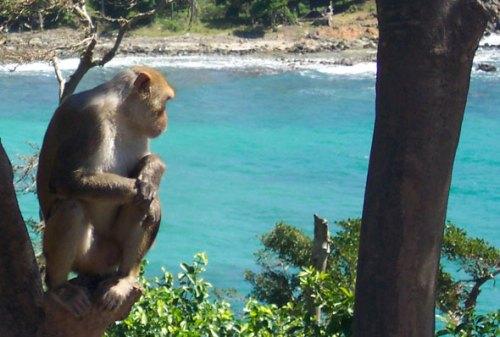 Monkey_cp590