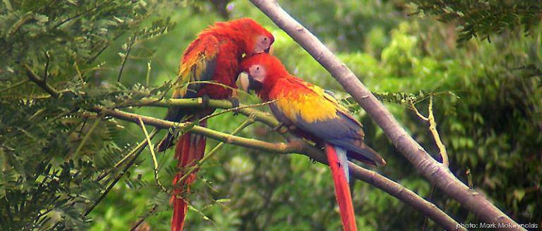 birding-belize-1