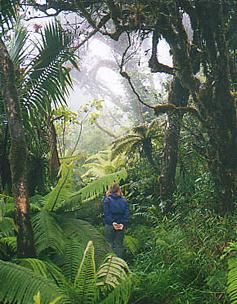 dwarf_forest2