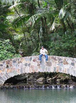 el_yunque_rainforest_bridge