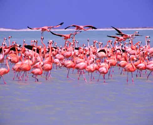 flamingo.jpg?w=500