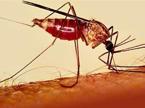 Increase of malaria cases in the dominican republic repeating islands a recent article explains that the increase in malaria cases in the dominican republic could be linked to the january 12 earthquake in haiti publicscrutiny Images