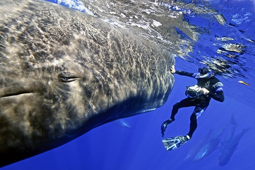 Photography contest and sperm whale