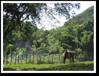Reconocen en Camagüey labor preventiva del Cuerpo de Guardabosques