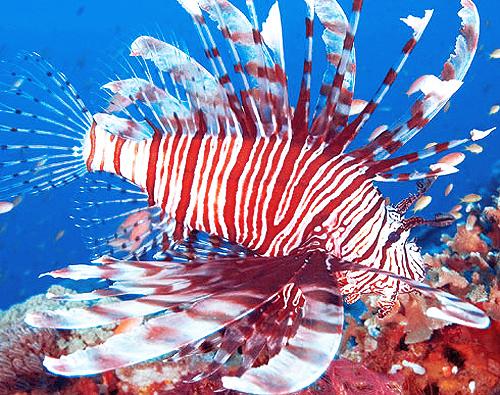 Caribbean Invasive Species Workshop Opens Repeating Islands