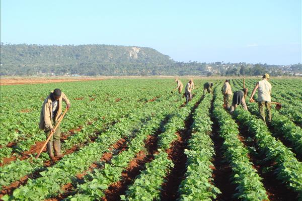 helping cuban reforms through agricultural trade repeating islands