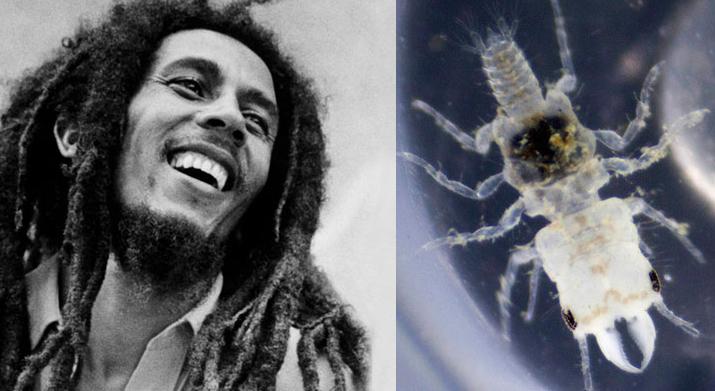 No crustacean, no cry? Bob Marley gets his own species – Repeating ...