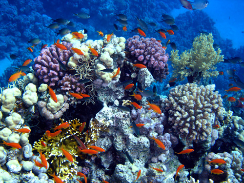 coral-reef-scene
