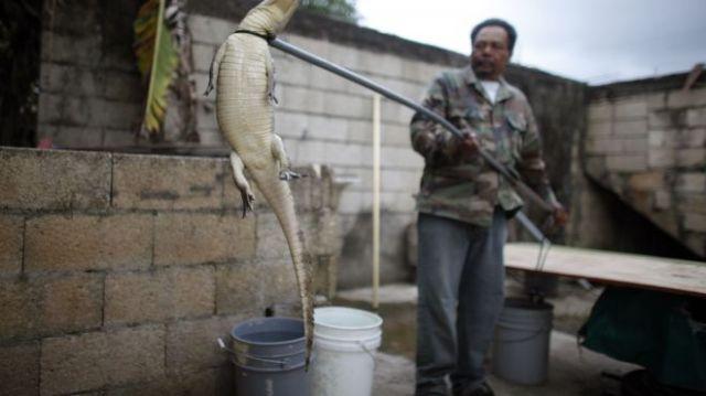 Puerto Rico Catching _Grat (4)