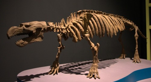 pezosiren-skeleton-large-990x541