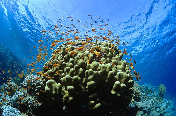 Caribbean-Reefs