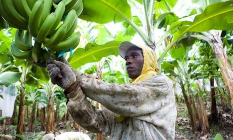 Fair-trade-banana-farmer--005