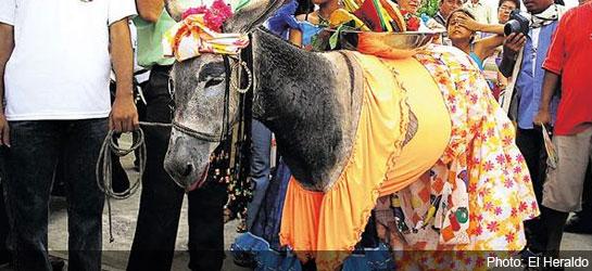 festival_burro
