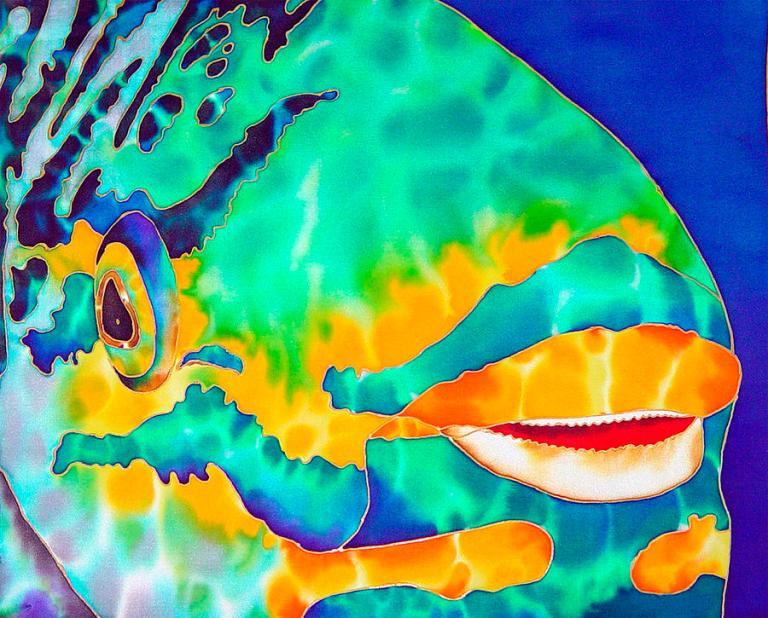 queen-parrotfish-daniel-jean-baptiste