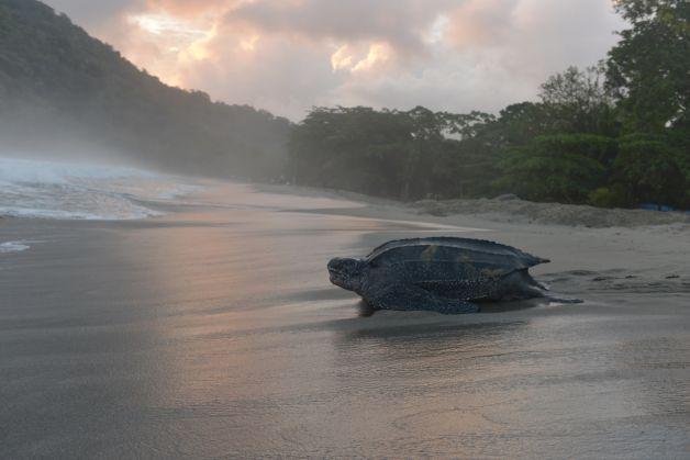 turtle.best471
