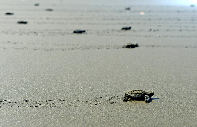 baby-turtle_newsfull_h