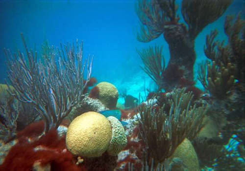 coral reefs value to caribbean society and culture Coral reefs in the caribbean have suffered significant changes due to the proximal effects of a growing human population the study showed clearly that the number of people living in close.