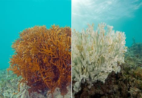 Bermuda Institute of Ocean Sciences – Repeating Islands