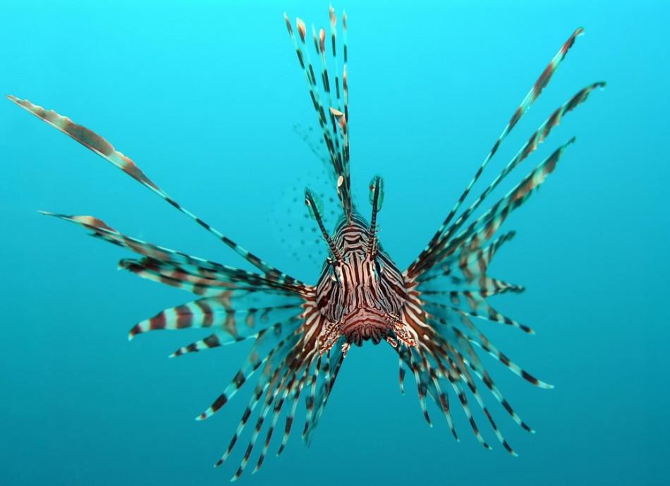 Lionfish Invasion May ...