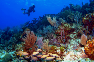 Coral-Reefs-Grand-Cayman-300x200