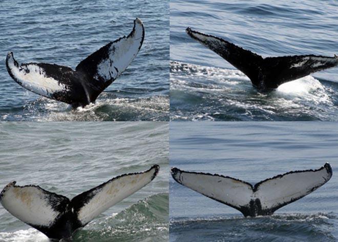 Alt_Whales tailsfingerprints