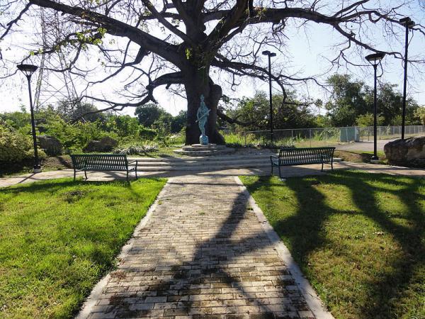 taino-chief-agueybana-ponce-puerto-rico-tree