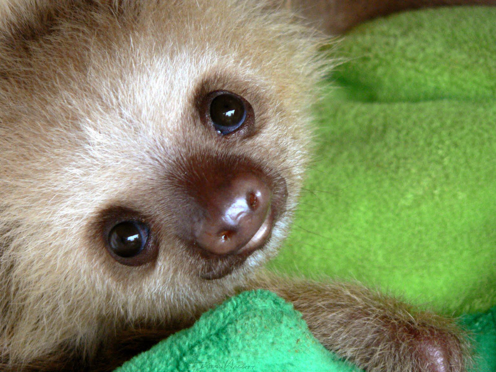 Meet the Sloths on Costa Rica's Caribbean Coast – Repeating Islands
