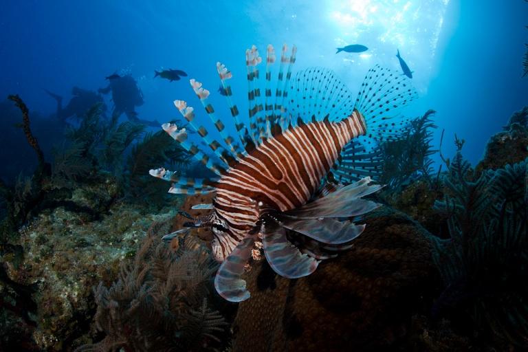 bahamas-lionfish