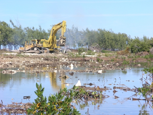 Deforestation of Mangroves in Bimini and Danger to Marine Environment ...