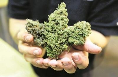 Jamaica Largest Caribbean Supplier of Marijuana to the US