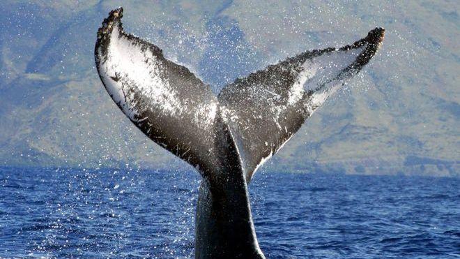 whales%20ap