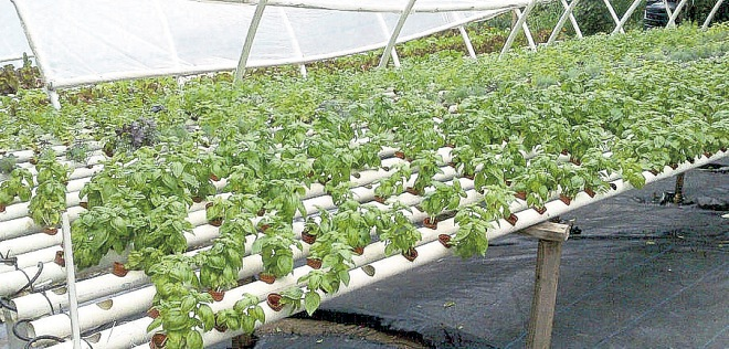 "Jamaica: Introducing ""The Family Garden"" – Repeating Islands"