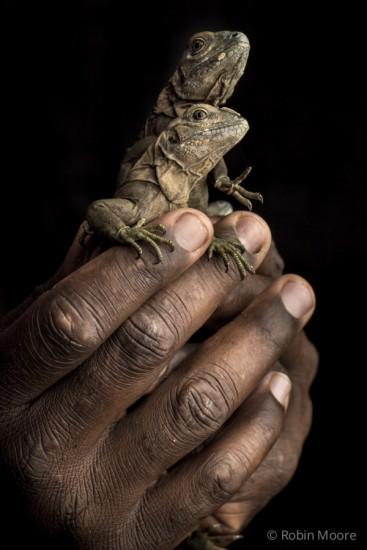 iguana.600x900