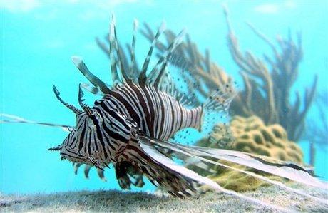 Lionfish Sightings