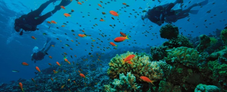 Diving-in-the-Caribbean-960x390