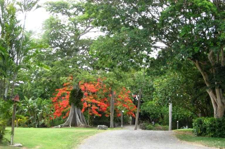 2008-07-17_St._George_Village_Botanical_Gardens_St._Croix_USVI