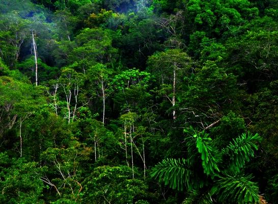 main_rain forest1a1