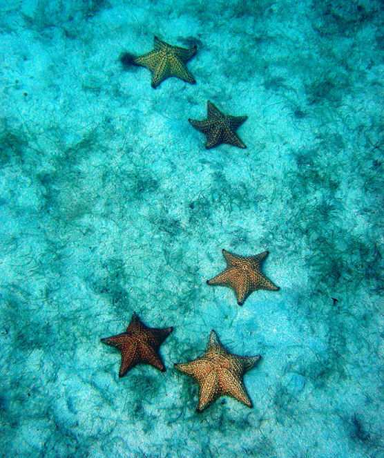 SeaStarsCRogersOST