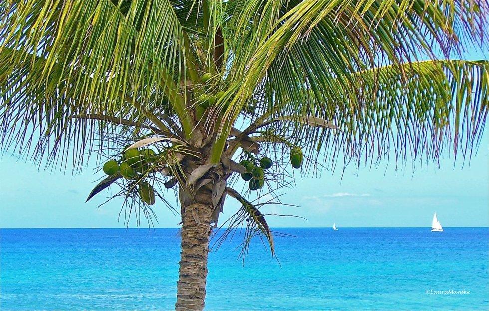 ©LauraManske_Anguilla_TreeSeaSailboat401ac
