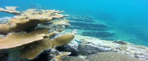 montalvo_elk_coral_with_marine_life_b330265ed3fb6ade98e7e921a0eb4db8.nbcnews-fp-1440-600