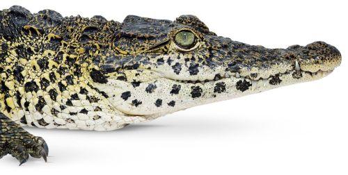 Crocs-11961-new1_kiwsac
