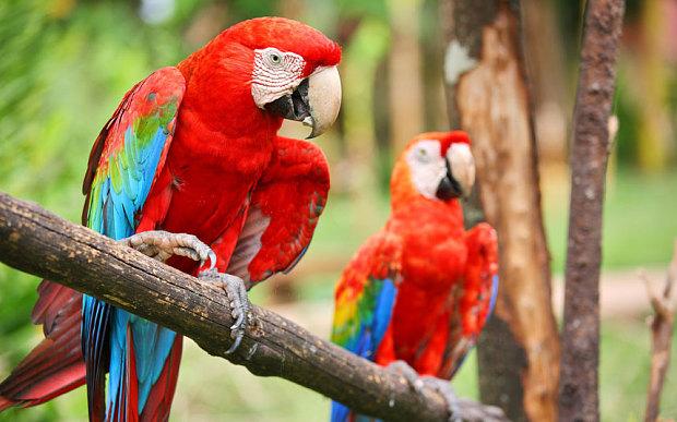 macaw-caribbean_3286170b