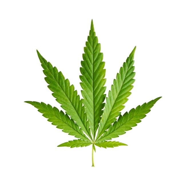 MarijuanaLeaf650