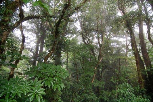 monteverde-cloud-forest-reserve-2