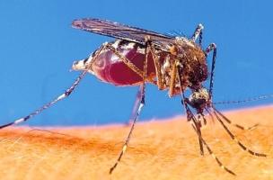 Mosquito_w304