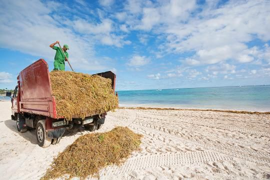 Seaweed snarls Dominican Republic´s biggest power company