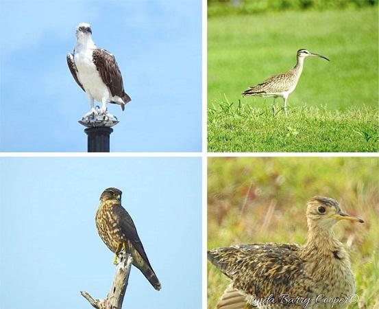COLLAGE-1-BIRDS