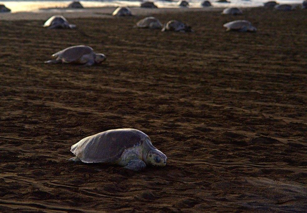 turtles01-1000x693