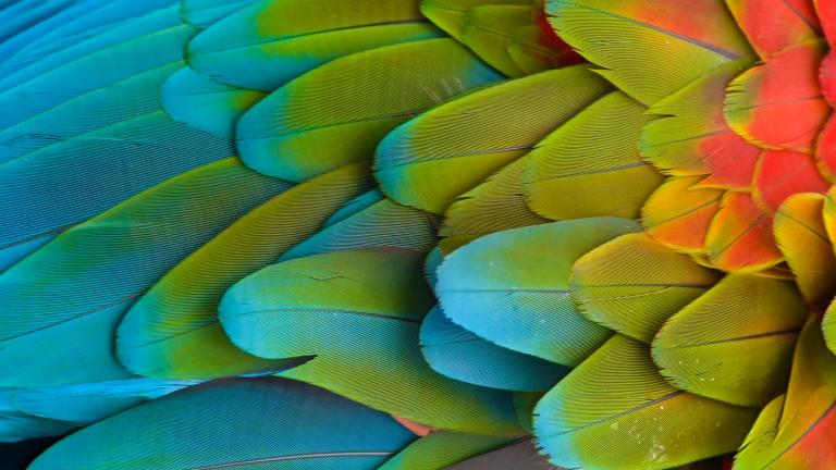 OBC_Caribbean_Feathers.jpg